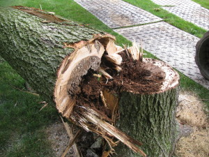 Stump Removal in Greensburg, PA